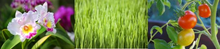 Calidad de las cosechas - Imagen