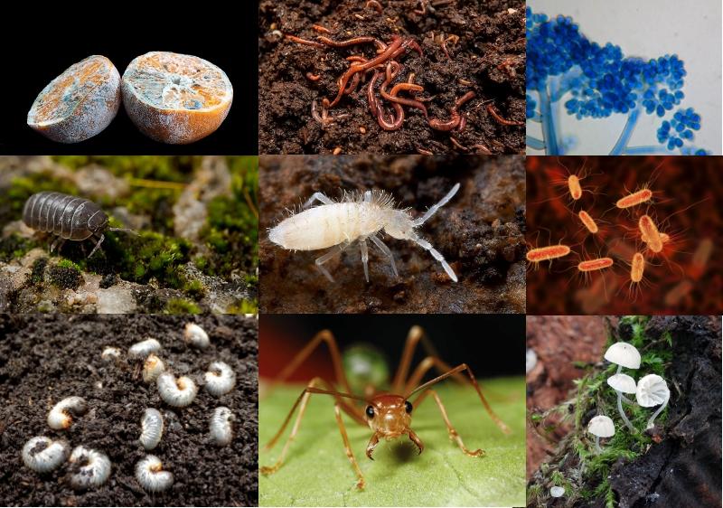 Microorganismos - Imagen
