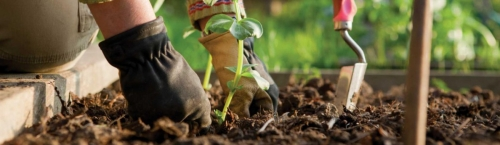 Aplicar el compost - Imagen
