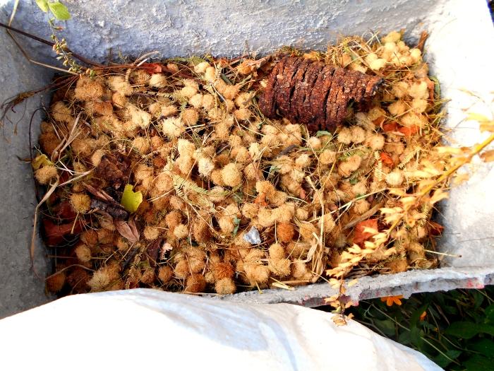 materiales marrones para hacer compost organico