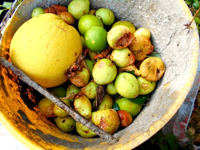 materiales verdes para hacer compost organico