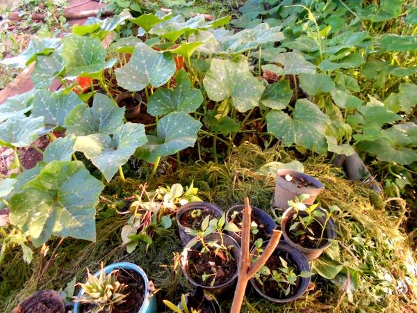 proyecto de elaboracion de abono organico compost