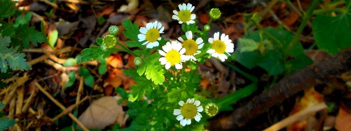 flores con compost